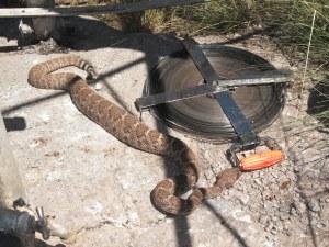 DSCF1123 Rattlesnake at Finley Well