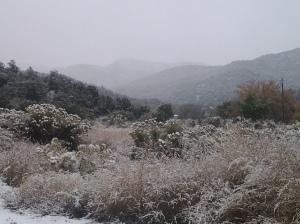 11.15.14 Snow in Bent