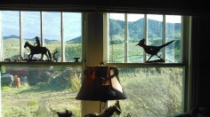 Nogal Window