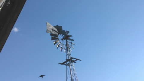 Raven and windmill